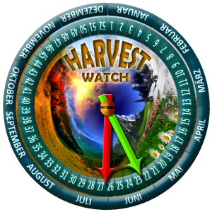 harvest-new03-SOURCHERRY