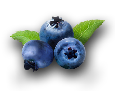 BLUEBERRY---HEIDELBEERE