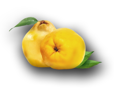 QUINCE---QUITTE